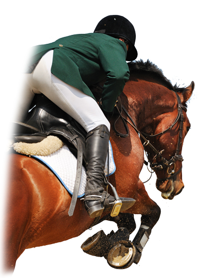 the pleasure of horse riding showjumping essay Please take a look at our horse riding holiday testimonials and read the reviews from our customers commenting on the riding holidays of equestrian escapes.